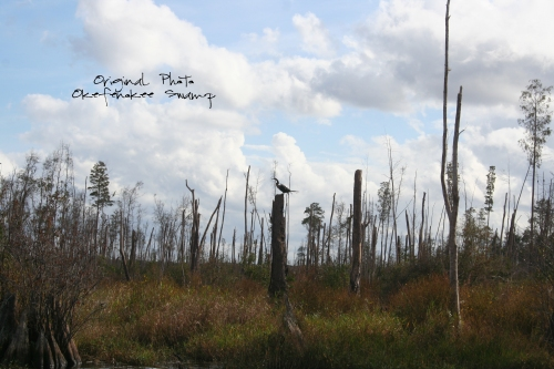 okeefenokee-swamp-orig-photo