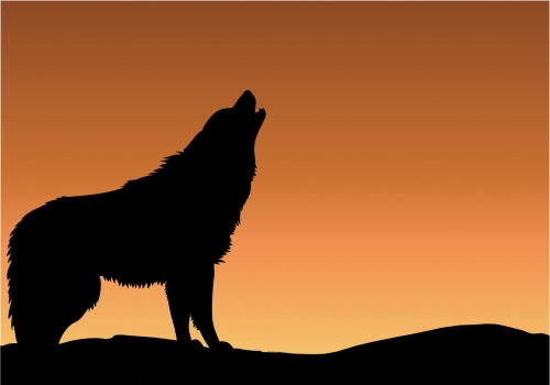 wolf-howling-sunset-silhouette